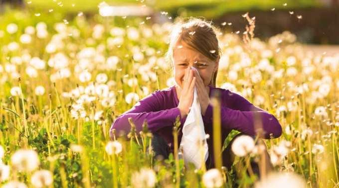На Прикарпатті разом із весняним цвітінням трав стартував сезон алергій (відеорепортаж)