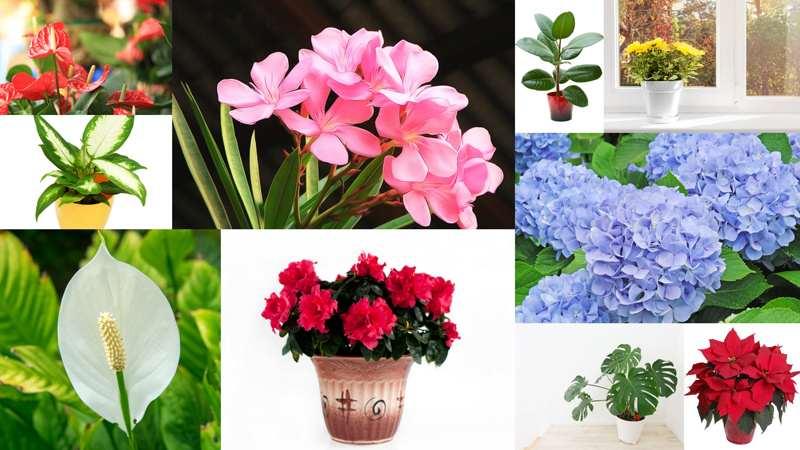 Аллергия на домашние цветы