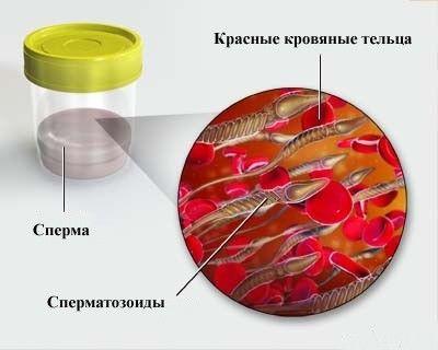 Звідки берется сперма