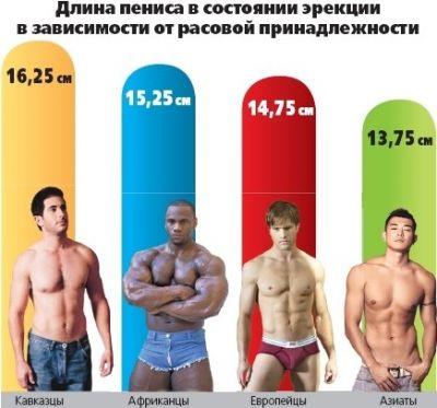 размер члена 15 см Новоаннинский
